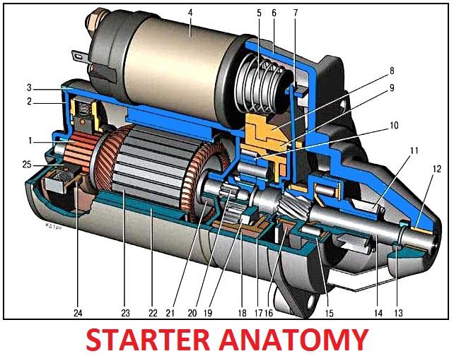 Starter anatomy